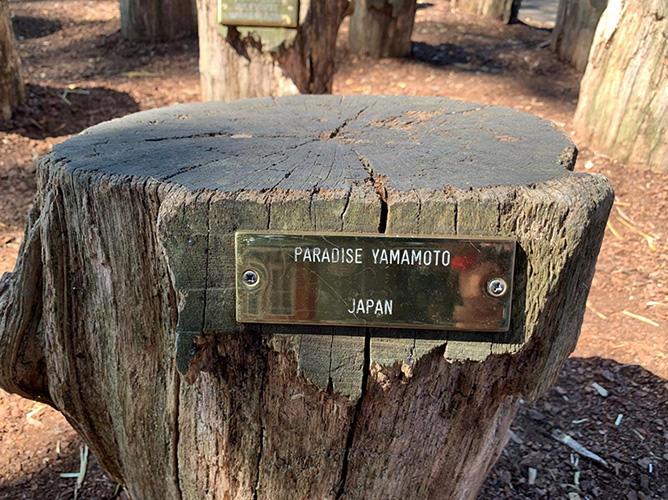 「世界サンタクロース会議」が開かれる屋外会議場の指定席 デンマーク コペンハーゲン バッケン 22年座り続けたこの椅子は、来年新しい切り株に交換される予定。それならコレも日本に持って帰りたい・・・などと、つい思ってしまう自分。(撮影:筆者)