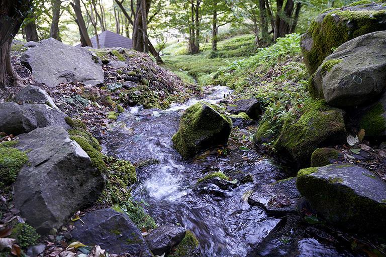 大出口泉水の清冽な流れ。「平成の名水100選」に選定されたとき、東京都内で行われた式典に代表として出席したのは東横山集落の町内会長だった。「他の自治体からは当然のように市長や助役が列席していたそうです。旧柿崎町は平成17年の合併で上越市の端の柿崎区になったばかりで、名水の認定もあまり話題にならなかったのです」(八木社長)