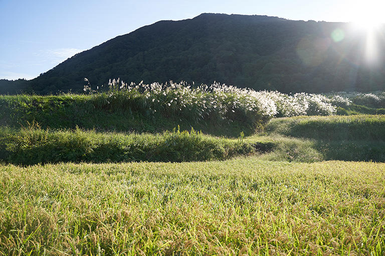 棚田の背後には標高757メートルの尾神岳。この山のブナ原生林が、どんな乾季にも涸れることがないという名水、大出口泉水の供給源だ。