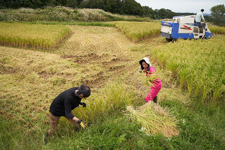 棚田は形が不規則なため、すべてをコンバインで刈ることはできない。田の端の場所は手刈りで丁寧に稲を刈る。