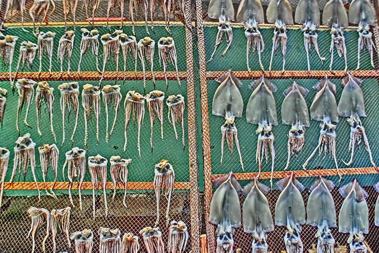 モンゴイカではなく、干された姿がマンボなイカ (撮影:筆者)
