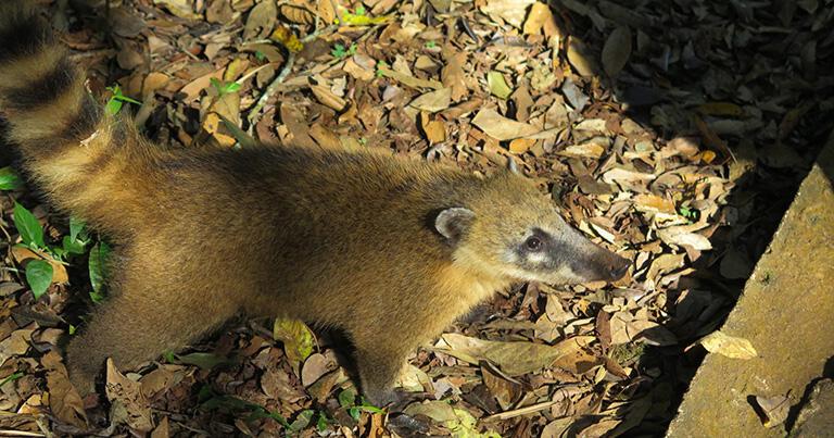 公園内には野生動物も現れる。これはハナグマ