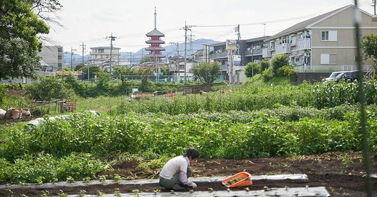 「いや、東京だからこれすごい、かっこいいね、東京らしいね」といわれるような農業を作りたいという気持ちは持っています。
