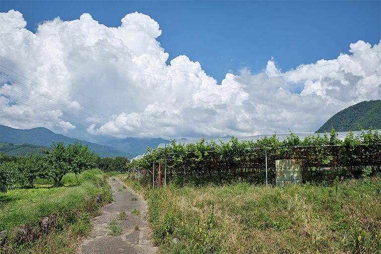 ワイナリーから車で5-6分のところにある自前のブドウ畑(山梨県甲州市塩山)