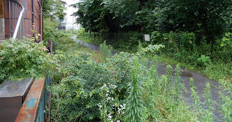 東大キャンパスの小道に沿って流れる清流。といっても、夏の時期だったので草が生い茂ってその姿は見えなかった。残念!