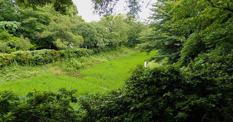 青々とした稲が育つケルネル田圃。細長い水田が続いており、谷の地形がよく分かる