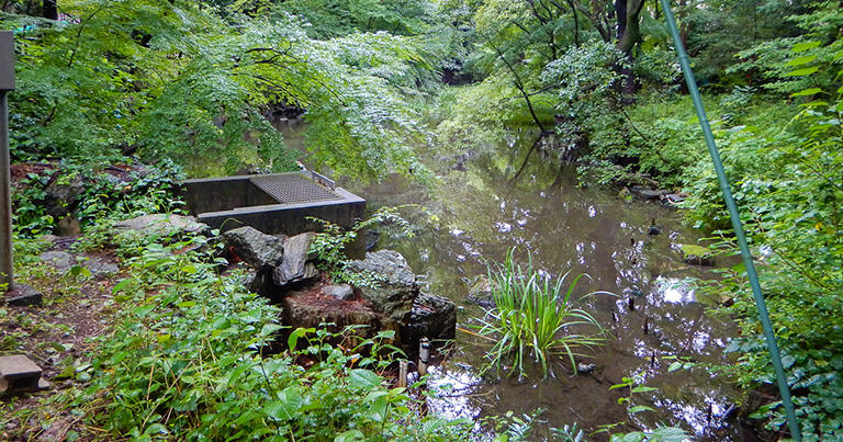 ケルネル田圃のある谷頭(こくとう)には、空川の水源の一つである溜池も残されている