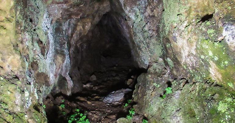 鉱脈を探すために掘った狭い坑道は、石見銀山の山のあちこちにある