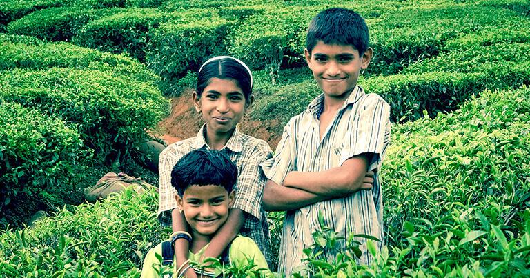 ニルギリの茶畑で出会った子どもたち