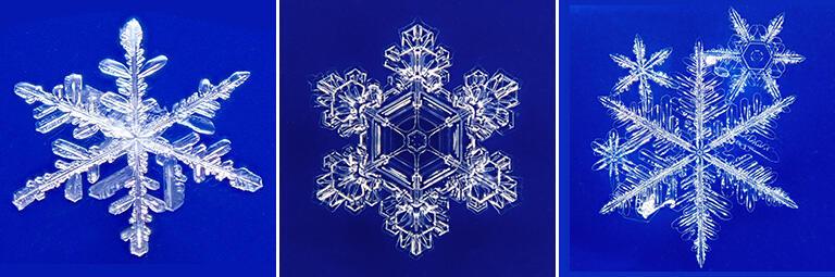 「楽しい雪の結晶観察図鑑」にも収録された雪の結晶の写真(撮影:武田康男)
